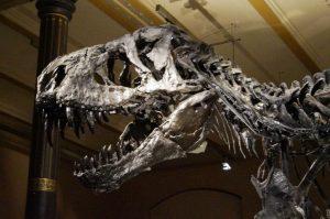 Dinosaurierskelett im Naturkundemuseum Berlin